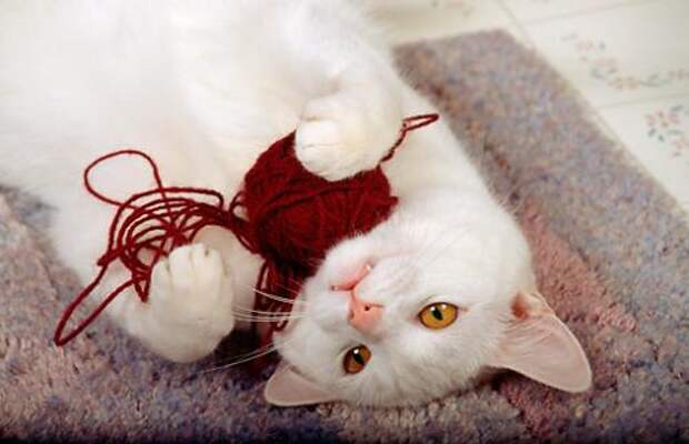 http://petstime.ru/sites/default/files/styles/article-500/public/field/image/cat-wool.jpg?itok=zv8p3Qh1