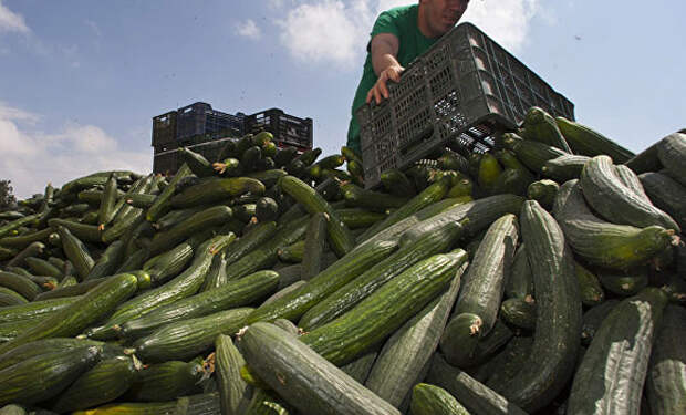 Почему огурцы едят только в бывшем СССР