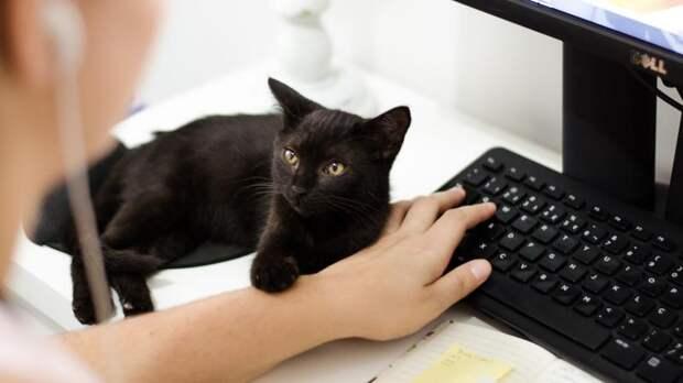 «Без кота – и жизнь не та»: как в Петербурге функционируют офисы с питомцами