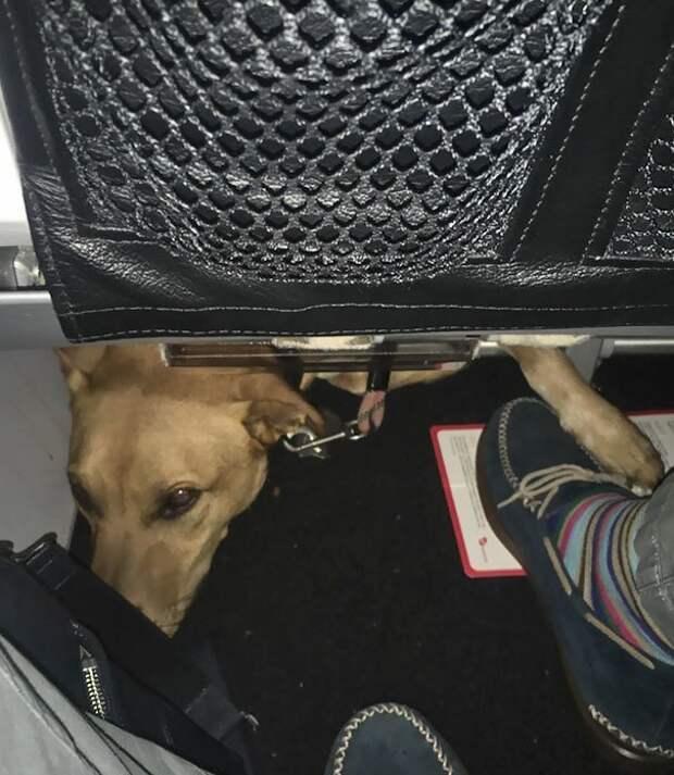 Ку-ку! Может, поиграем? животные, забавно, летайте самолетами, мило, пассажиры, самолет, собаки, хвостатые пассажиры