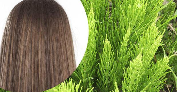 Лучшее натуральное средство для укрепления и роста волос
