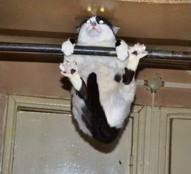 Немного о спортивных умениях котов