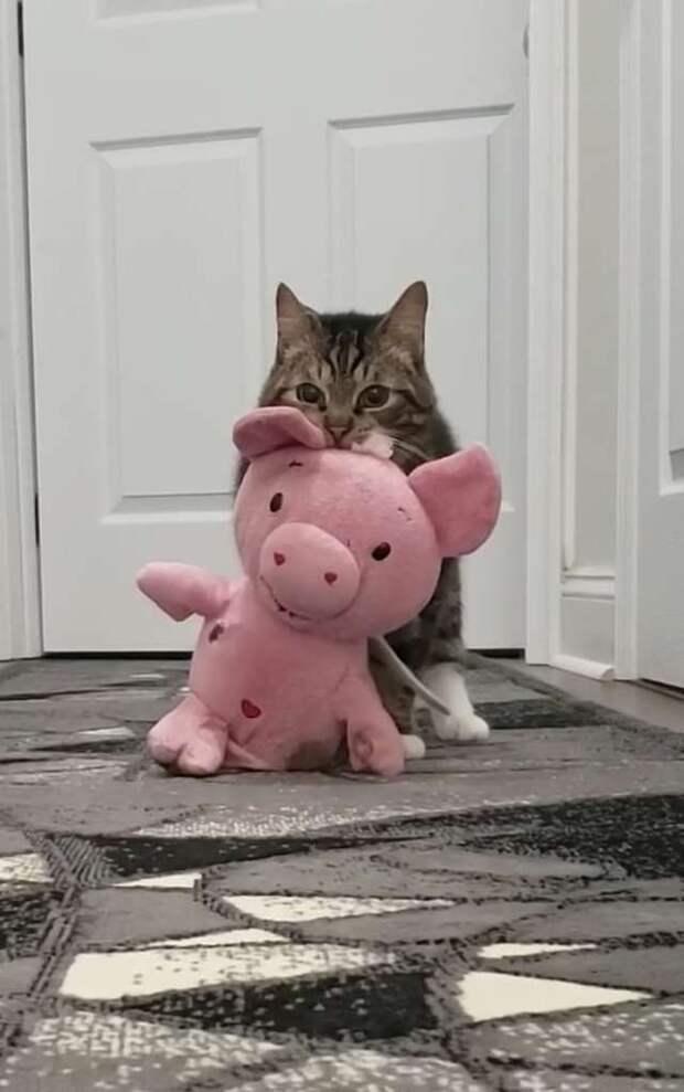 кот с игрушкой