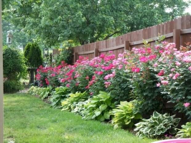 Как отгородиться от соседей на даче