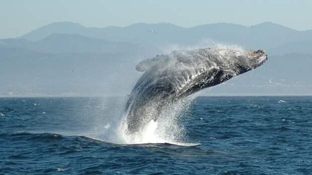 Власти РФ хотят запретить вылов китов и дельфинов
