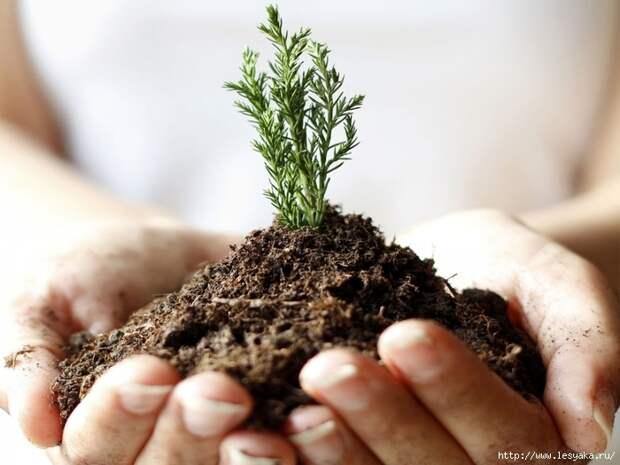 Применение растительного грунта