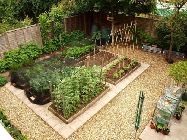 Несколько простых решений могут значительно улучшить урожай. /Фото: i1.wp.com