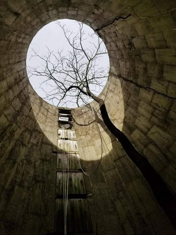 9. «Дерево, которое выросло в старом бункере» в мире, подборка, природа, удивительно, фото