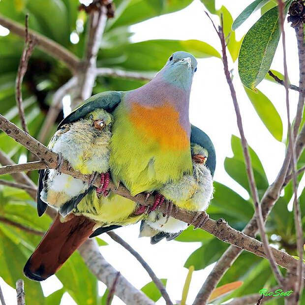 cute-bird-parents__700