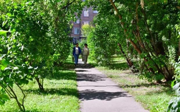 Теперь ветки деревьев не мешают проходу»/Денис Афанасьев, «Юго-Восточный курьер»