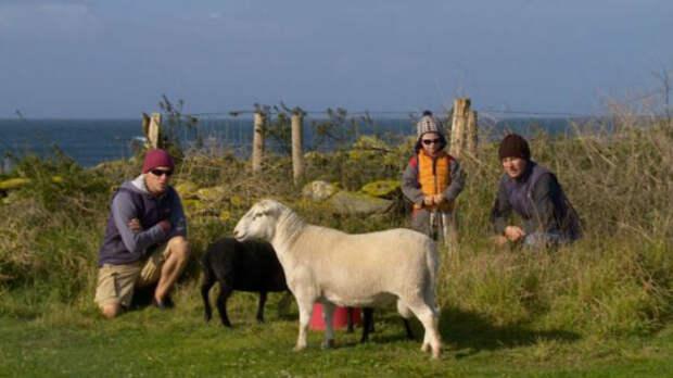 Во Франции ищут интровертов, которые будут жить на острове с тюленями, овцами и кроликами