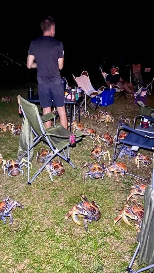Очень большие и очень голодные крабы нарушили семейный пикник в Австралии