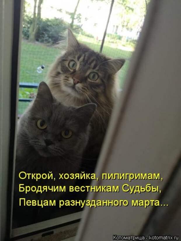 4208855_1556890746_kotomatricy26 (500x668, 53Kb)