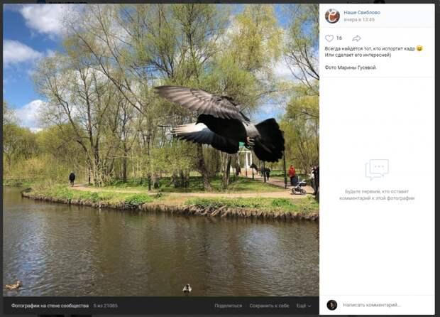 Фото дня: любящий покрасоваться голубь влетел в кадр в Свиблове