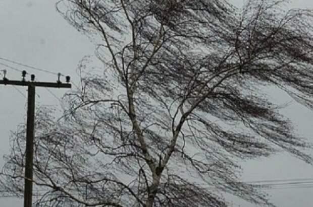 Костромичей предупредили о риске возвращения жуткого урагана