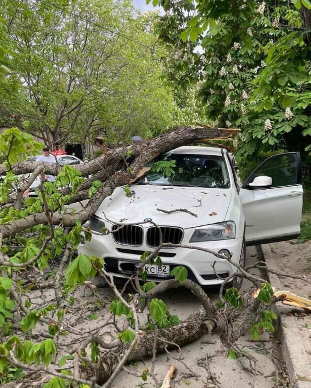 На улицах Симферополя деревья падают на автомобили