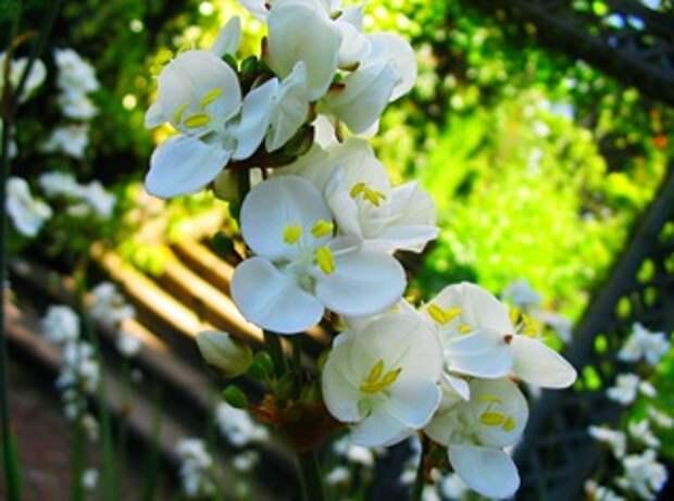 Цветовая гамма сада. Подбор цветов для сада.