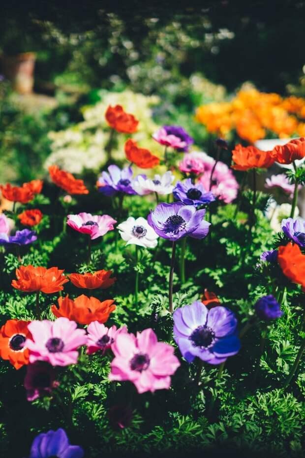 Запоминайте, где что посадили: садовые маркеры своими руками