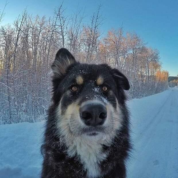 Стоматолог из Аляски и его милейшие собаки