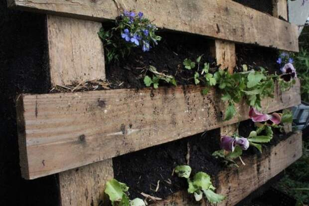 Старый поддон для растений