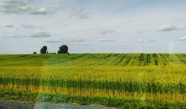 Внародную программу ЕРпредложили включить разработку аграрной политики