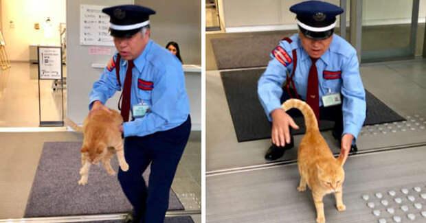 рыжий кот хочет зайти в дверь