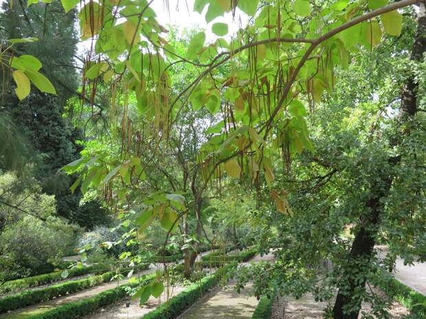 Королевский ботанический сад
