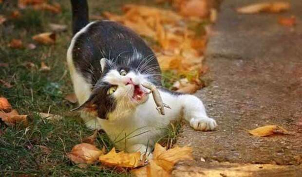 Кусь весело, коты, повадки, смешно, эмоции