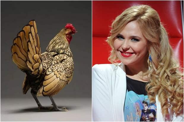 Типичная курица