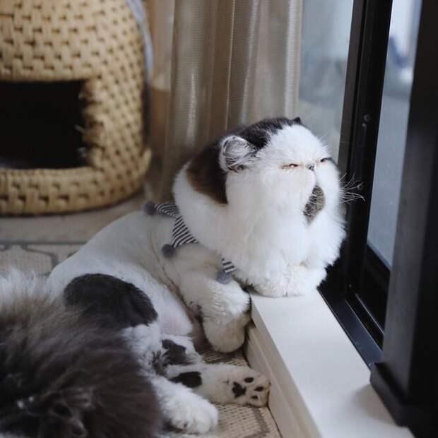 «Он неочень спортивный». Кот, похожий навсех нас, особенно поутрам!