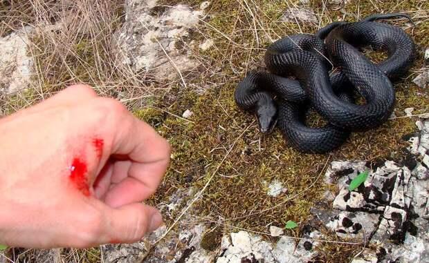 4 нижегородца пострадали от укусов ядовитых змей