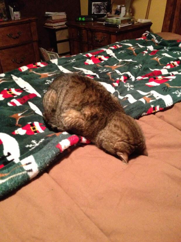 «Опять это утро?!» или 15 невыспавшихся котов, в которых каждый узнает себя