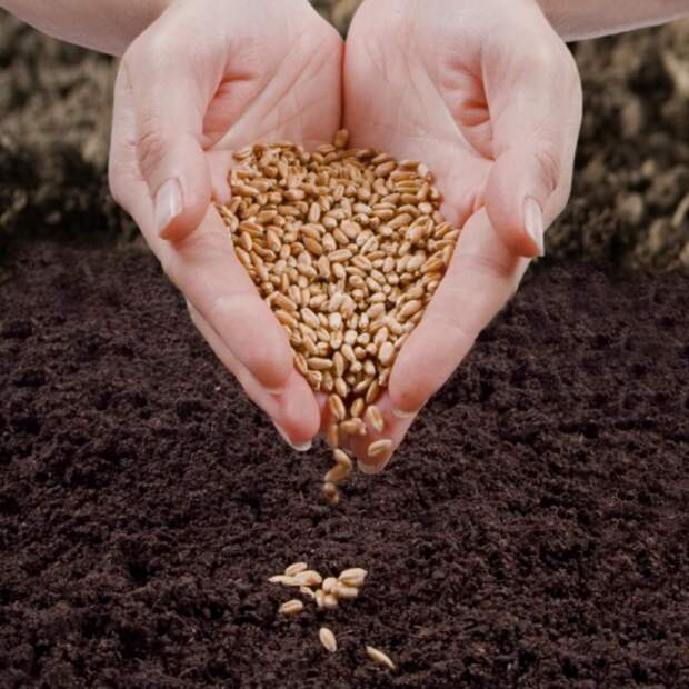 ПСИХОЛОГИЯ. Закон семян и самый наглядный мотиватор
