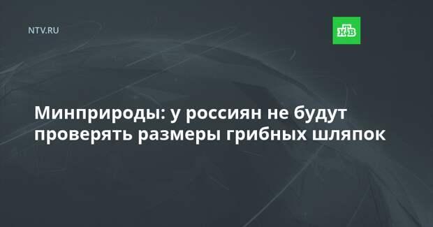 Минприроды: у россиян не будут проверять размеры грибных шляпок