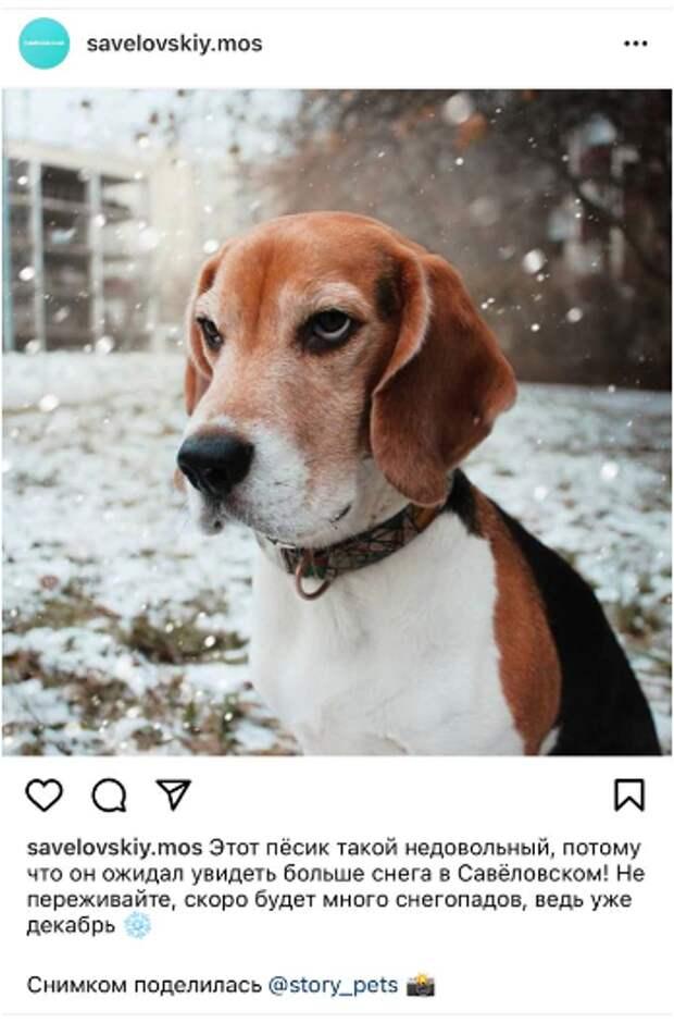 Фото дня: пес в ожидании снега
