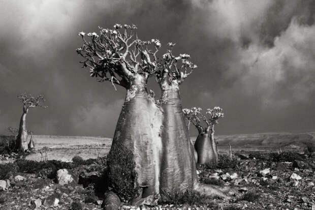 10 снимков старейших деревьев на Земле
