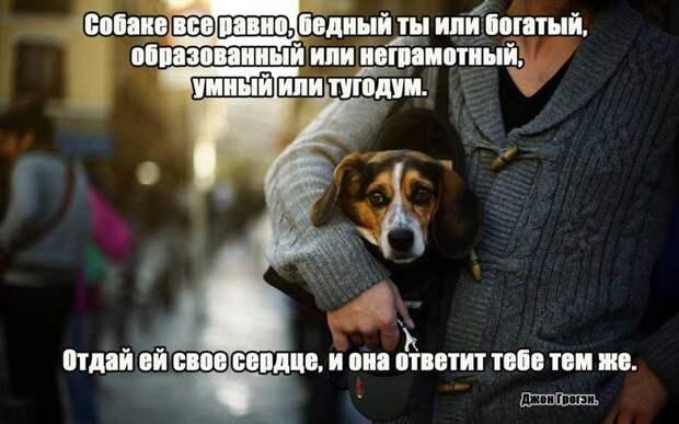 3.  афоризмы, животные, собаки