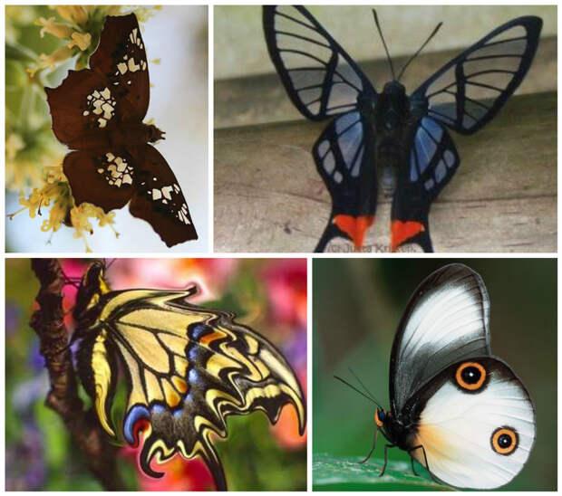 Бабочки способны различать желтый, зеленый и красный цвета. бабочки, интересное, красота, насекомые