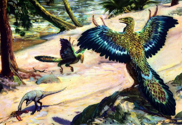 Как появились птицы?