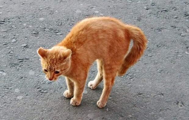 Трогательная история поиска потерянного котенка