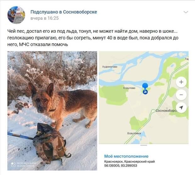 Пост в соцсети о спасении пса