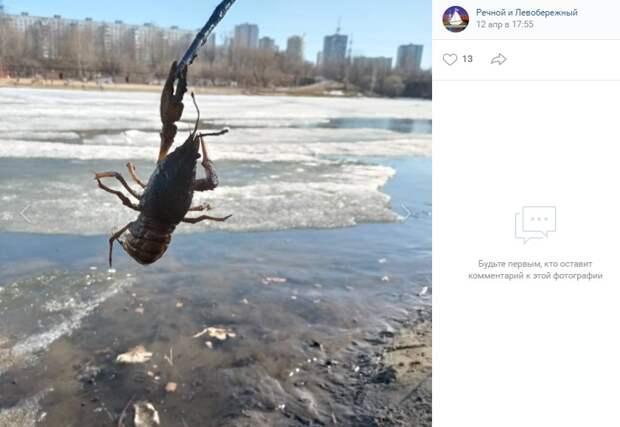 Фото дня: на Химкинском водохранилище оживились раки