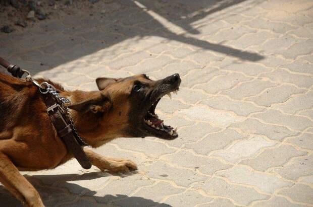 Проверку по нападению собаки на ребенка начали следователи Ангарска