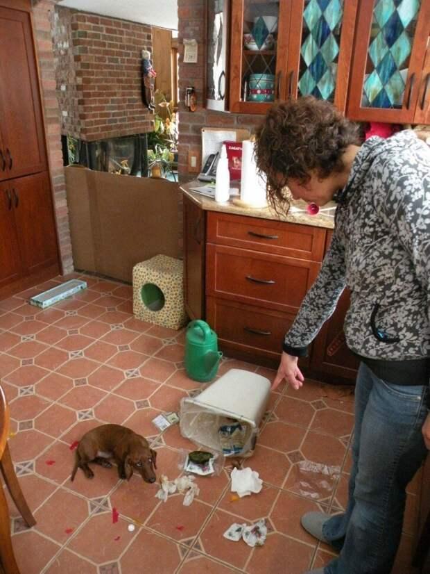 Я просто мусор сортировал врасплох, кошки, смешные, собаки, фото, шкодники