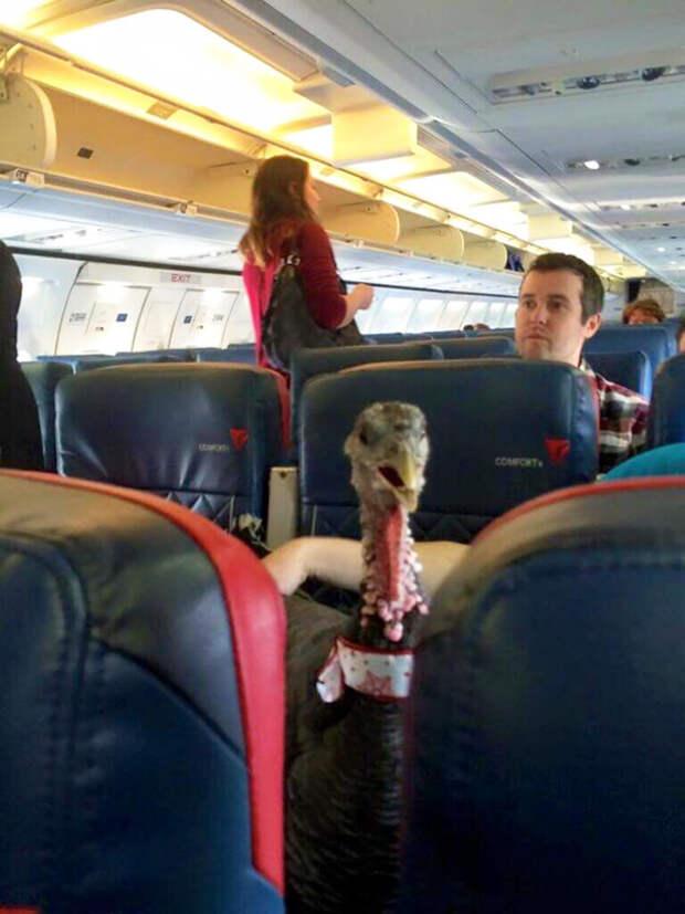 Попутчики из ада: самые раздражающие люди на борту самолета