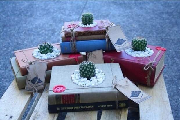 Кактусы и книги.