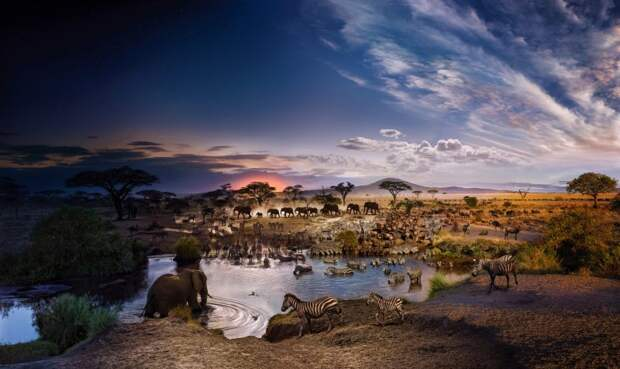 Врамках одного дня: удивительный фотопроект Стивена Уилкса