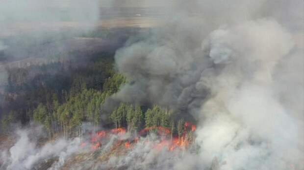 Снова банальный грабёж. Экс-нардеп рассказал, кто в действительности стоит за пожаром в Чернобыле