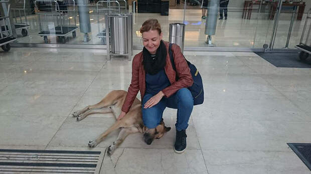 Стюардесса приютила бродячего пса, который каждый раз встречал ее возле отеля в Буэнос-Айресе