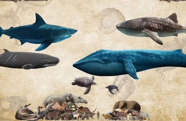 Видео: Сравнение размеров животных, существующих сейчас, с их дальними родственниками
